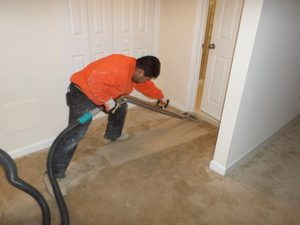 Disaster Restoration Expert Cleaning Carpet After Flooding in Taylor MI